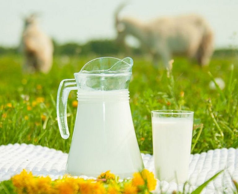 козье молоко для грудничков